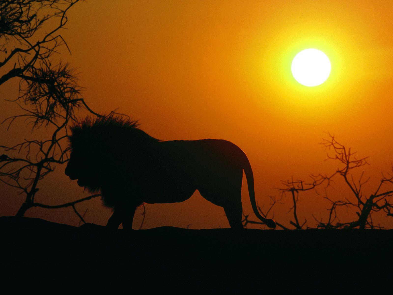 Un safari en Tanzanie avec safarivo.com